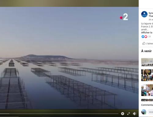 La qualité des eaux de la lagune de Thau mise à l'honneur sur France 2